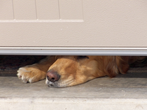 Keeping Children And Pets Safe Near Garage Doors